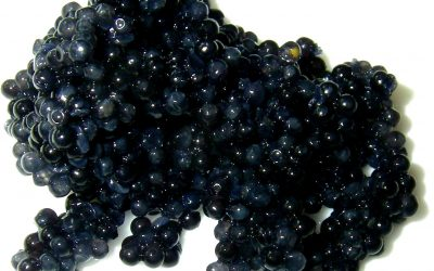 La Préparation du Caviar